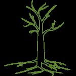 Trin 3: grenene bliver til